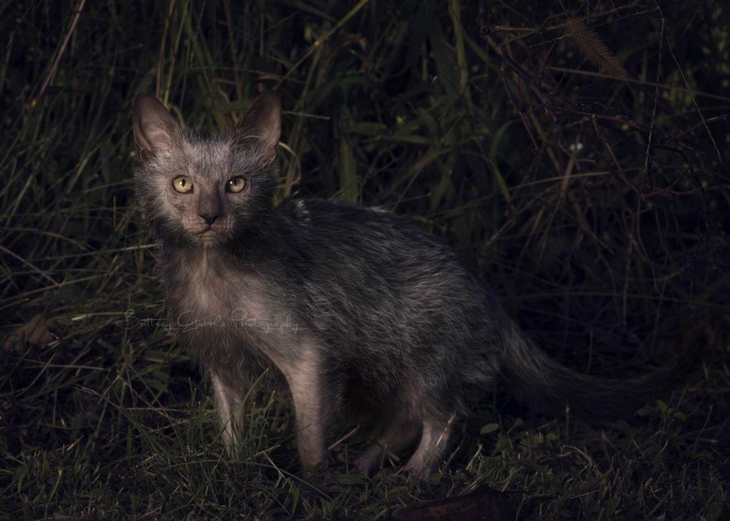 Кошка-оборотень