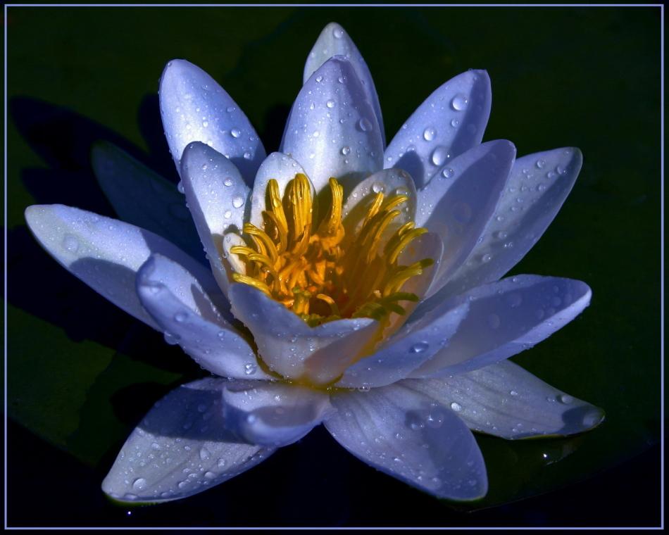 Благоприятные дни для посева цветов по лунному календарю в мае