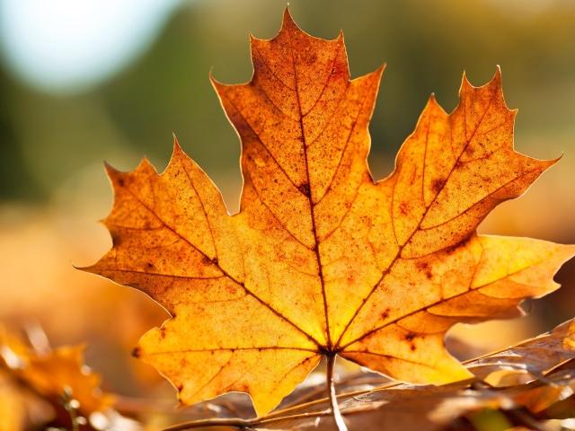 Лечение суставов кленовыми листьями остеотомия тб сустава