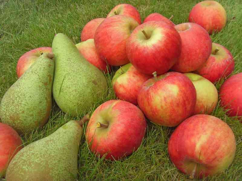 Яблочное варенье с грушами