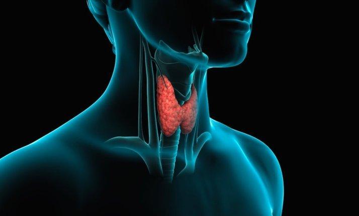 Заболевания щитовидной железы вызывают кашель, боль в горле