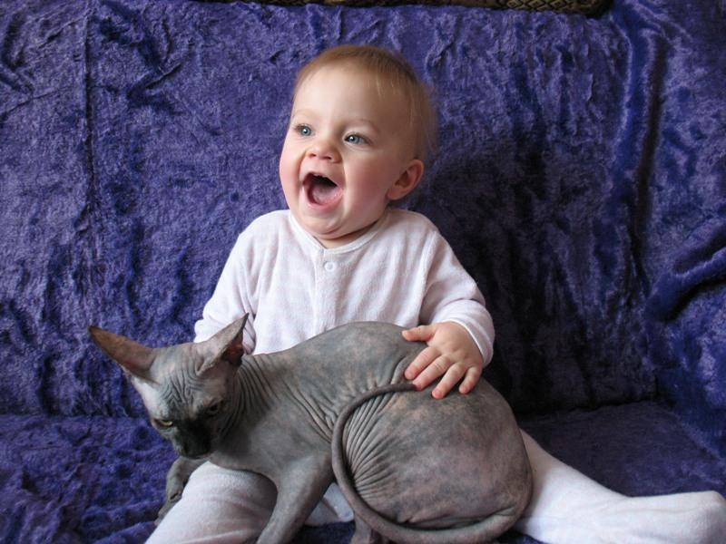 Сфинксы хорошо уживаются в семьях с маленькими детьми