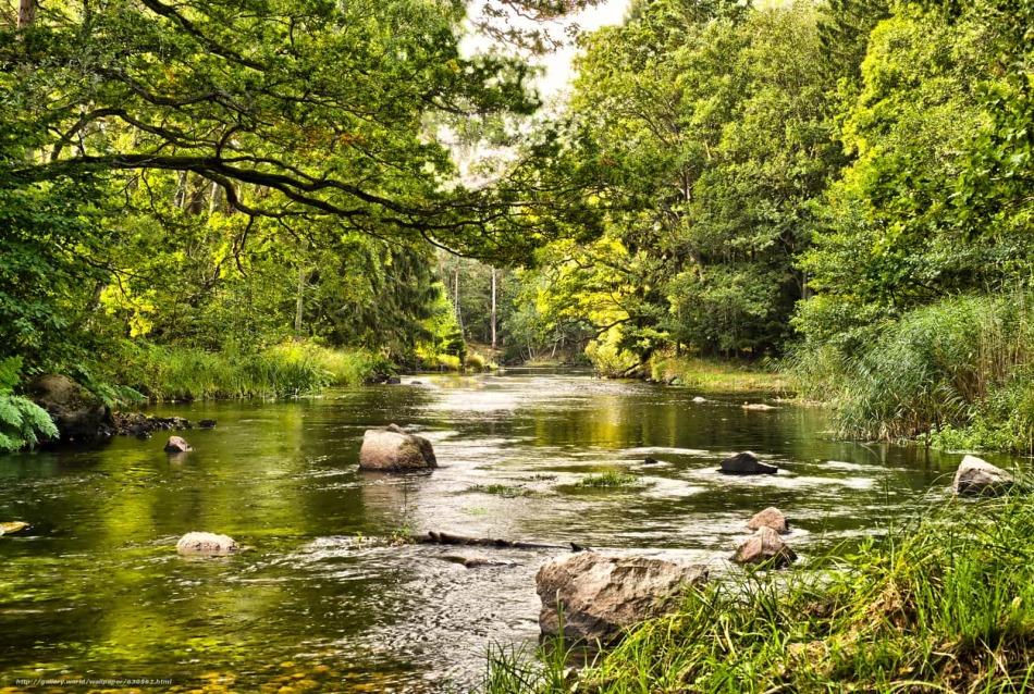 Чем больше было воды в реке во сне, тем благоприятнее ситуация сложится.
