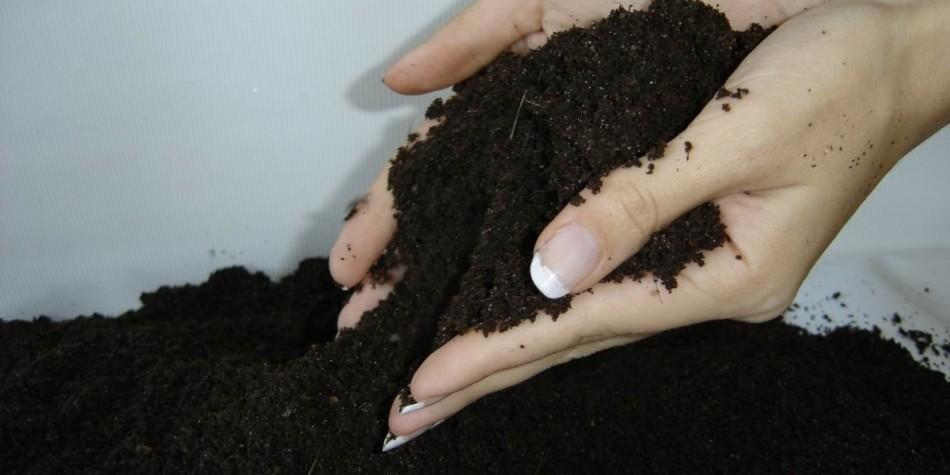 Смесь грунта в руках у девушки перед засыпанием в горшки для пересадки каланхоэ