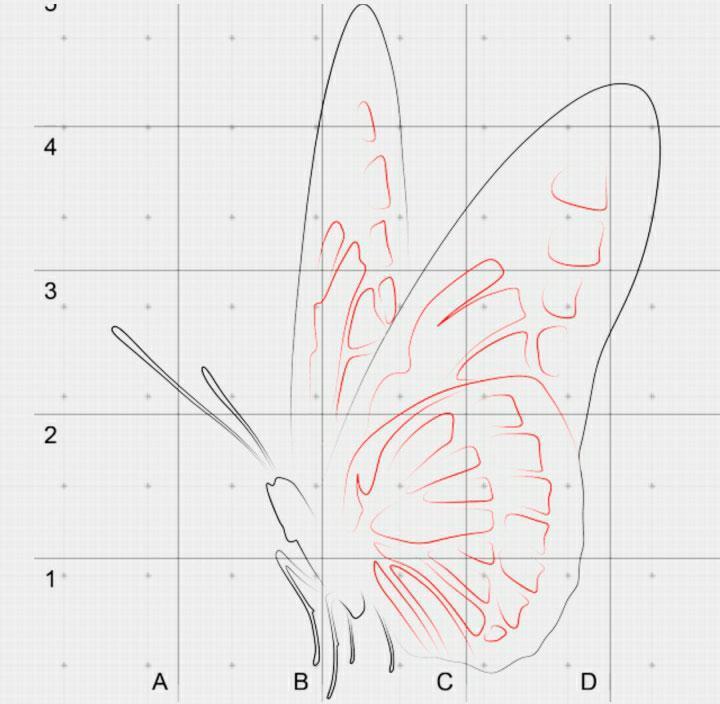 perenosim-uzor-na-krilishki Как нарисовать 3д (3d) рисунок на бумаге карандашом