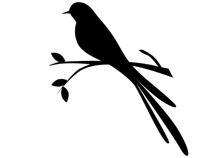 собственного птички на ветке картинки для вырезания шерсти имеет