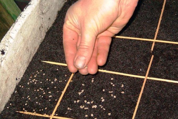 Количество семян после обеззараживания нужно будет увеличить