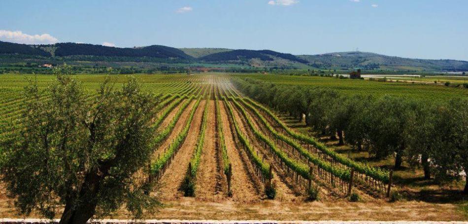 Типичный ландшафт апулии, италия