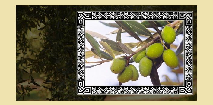 Добросовестное и расслабленное оливковое дерево покровительствует весам
