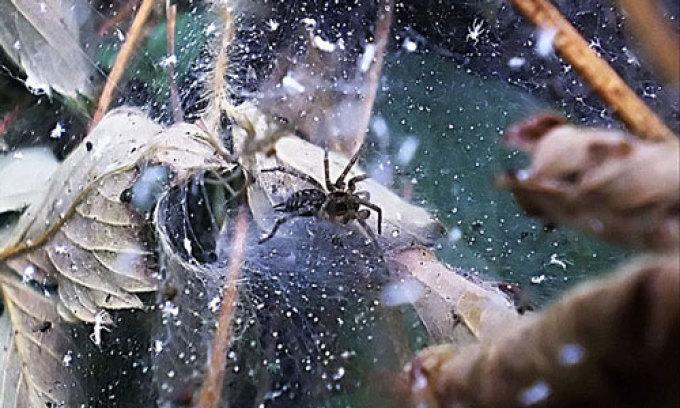 Приснился паук: толкование по соннику хассе