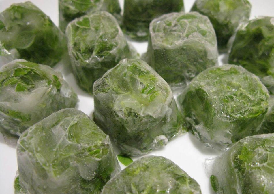 Правила заготовки рукколы на зиму в домашних условиях и советы по хранению зелени в морозилке и холодильнике