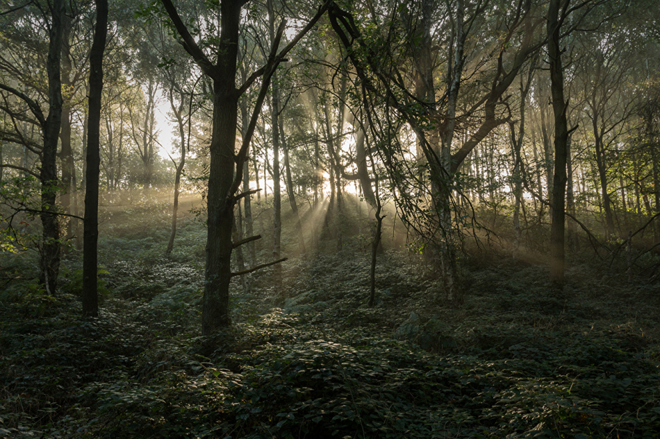 Идти за умершим в лес не стоит