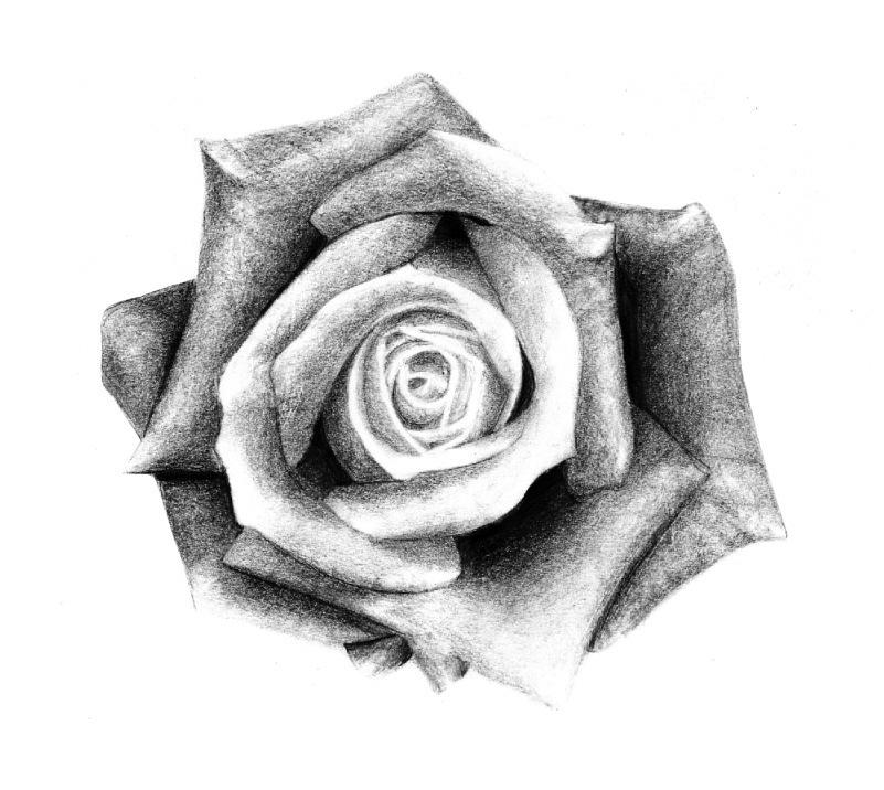 отличался рисунки роз на руке картинки писала стихотворения, новеллы