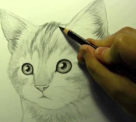 uchitivaite-osnovnie-principi Как нарисовать котенка карандашом поэтапно для начинающих и детей? Как нарисовать котенка аниме с милыми глазками, мордочку котенка?