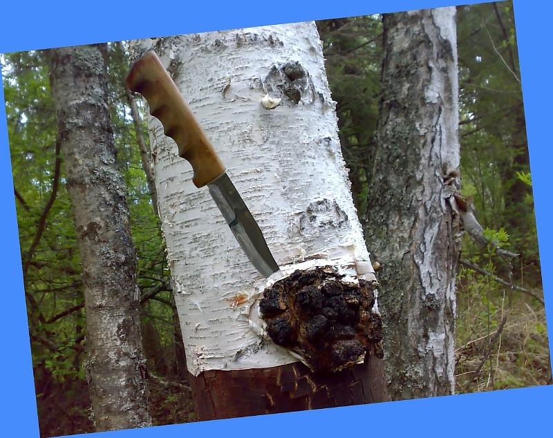Срезать гриб