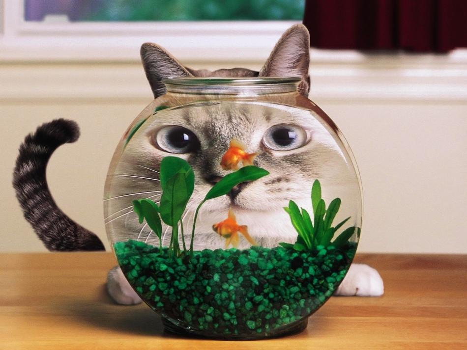 Имя для прикольного кота должно соответствовать его характеру