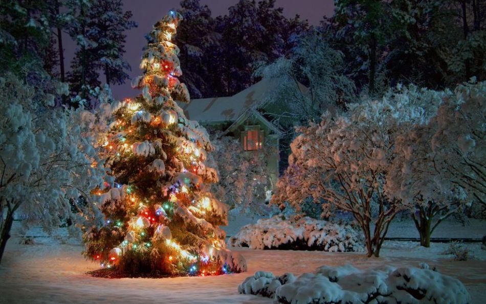 Лучшие оформления новогодних уличных елок