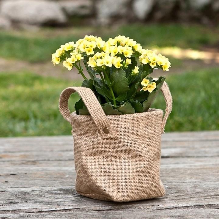 Цветущий каланхоэ в эко-сумке - отличный подарок на все случаи жизни