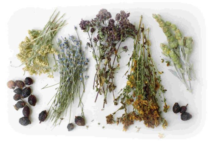 Повышение либидо отварами трав