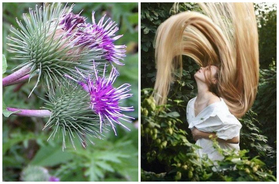 Репейник и девушка с длинными волосами