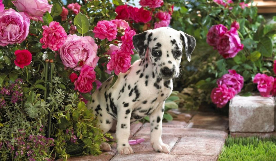 Русские клички для собак