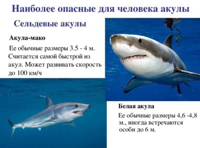 удивился картинка акулы и описание моменты