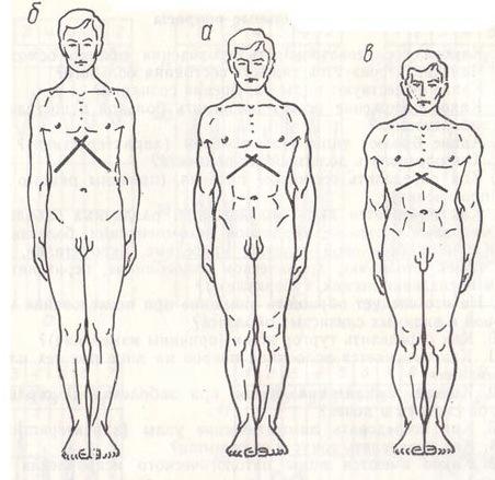 Изображение 5. виды форм грудных клеток человека.