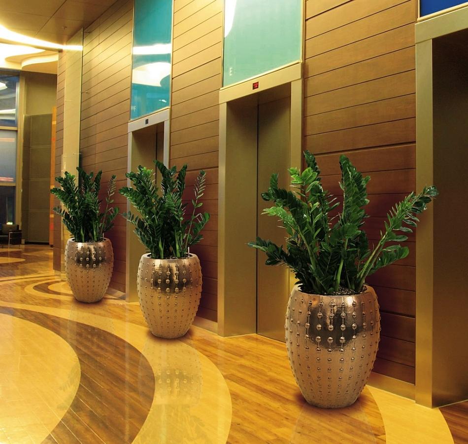 Цветок служит украшением гостиниц и ресторанов высокого уровня