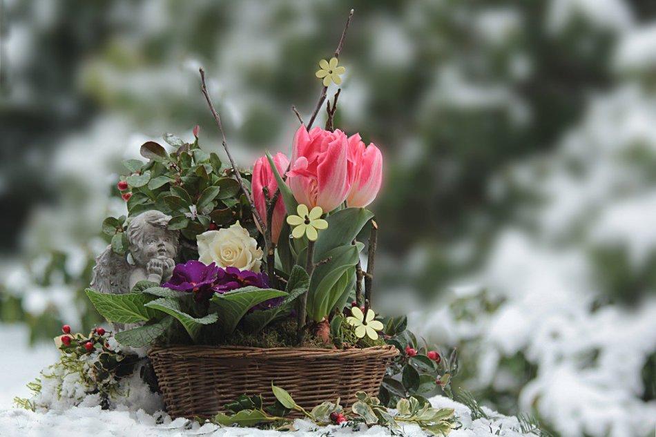 Февраль для огородника