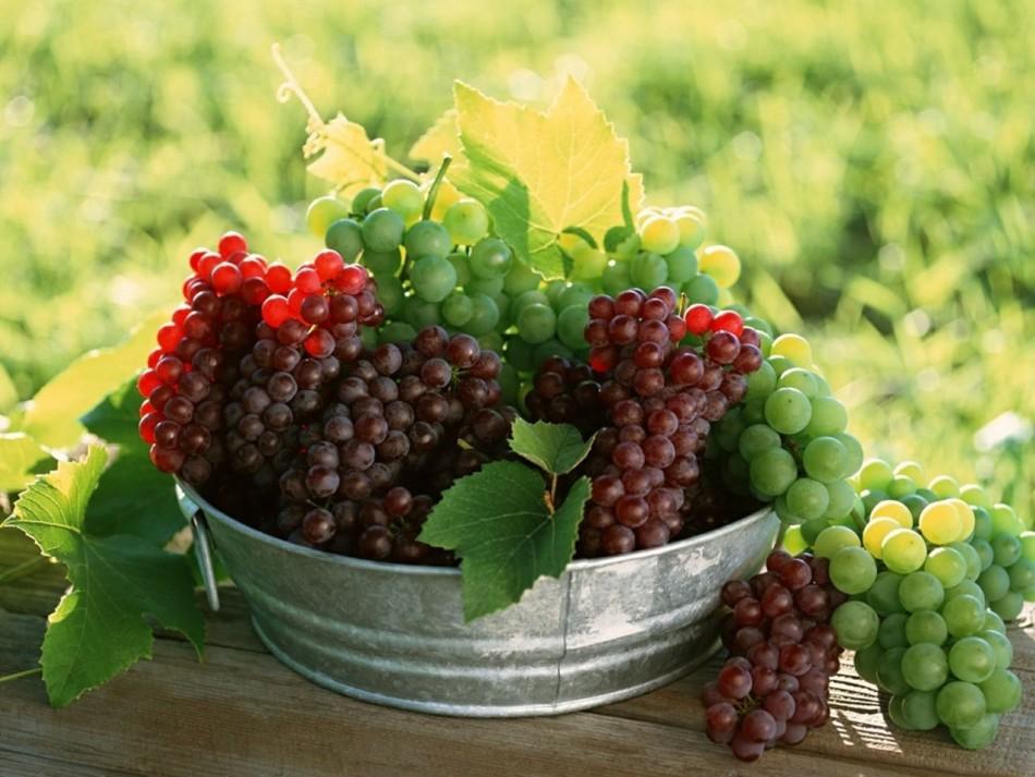 Собранный спелый виноград снится к исполнению желания