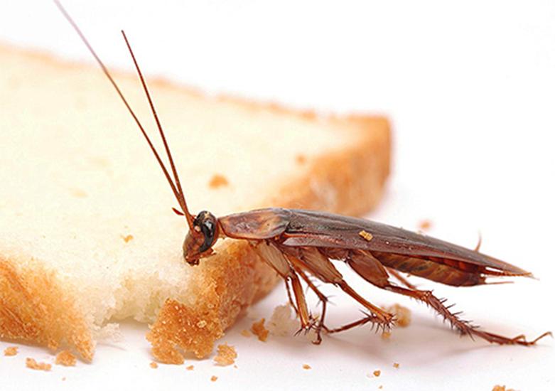 Крошки и брошенная на столе еда - приманки для тараканов.