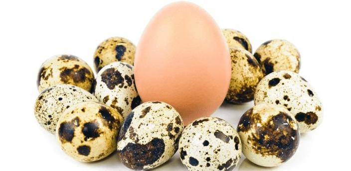 Куриные и перепелиные яйца в умеренном количестве не повышают холестерин