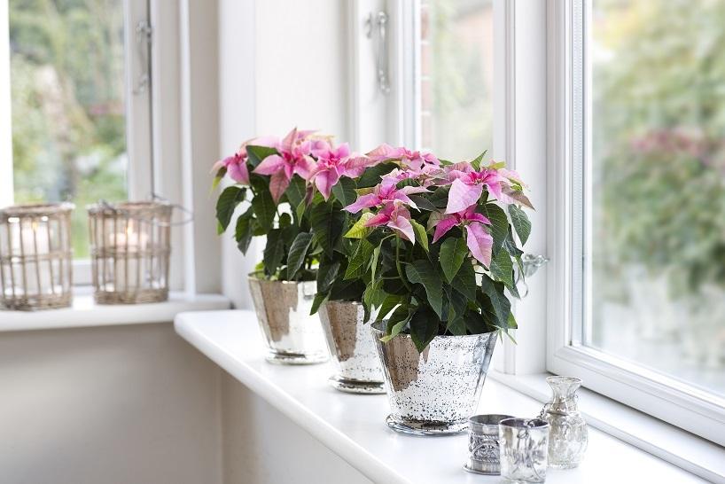 Благоприятные дни для комнатных растений и цветов в феврале