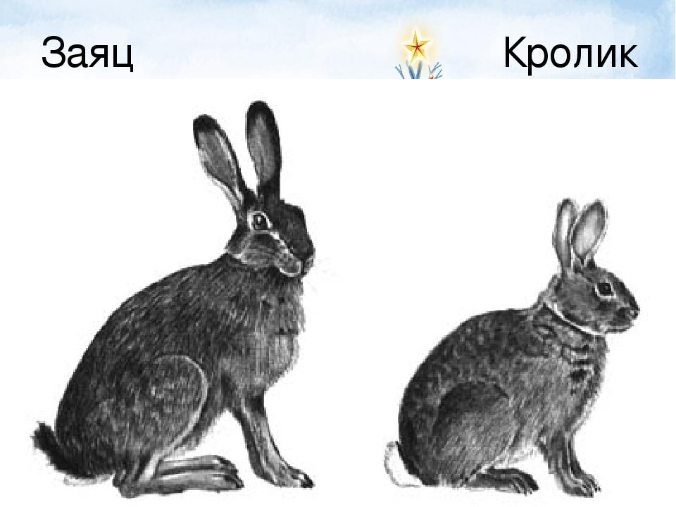 Заяц и кролик на рисунке