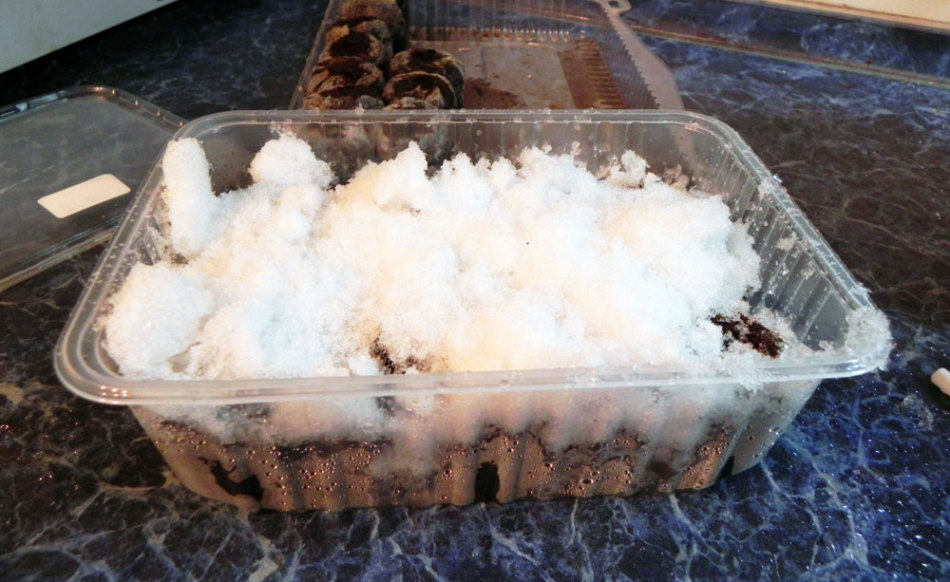 Стратификация клубники снегом