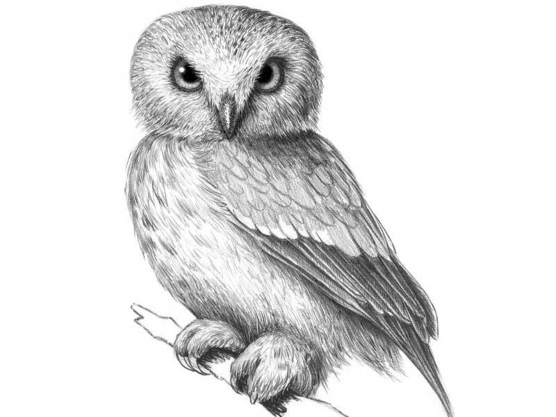 zashtrihuite-perya-v-verhnei-oblasti-krila Как рисовать сову карандашом поэтапно для начинающих и детей? Как рисовать по клеточкам сову, красками?