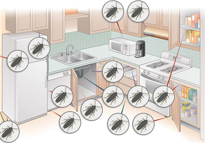 Излюбленные места тараканов на кухне.