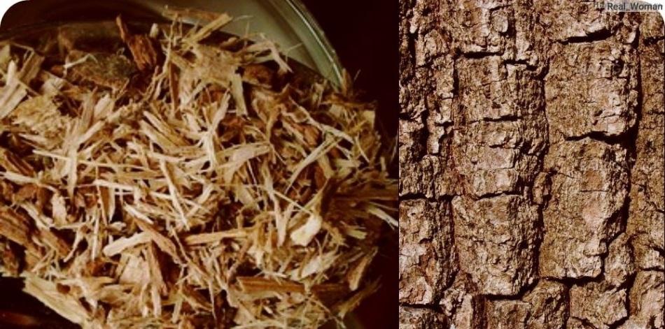Кора дуба в природе и измельченная для окрашивающего настоя для волос