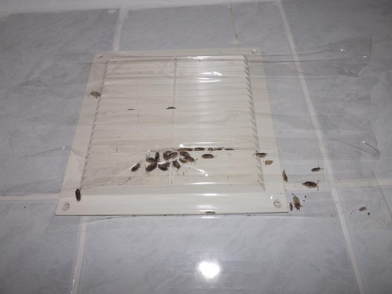 Мокрицы в ванной на вентиляционной решетке.