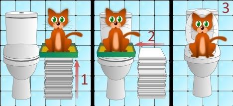 Этапы приучения кота к унитазу.