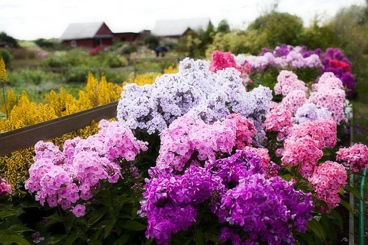 Яркий летние цветы