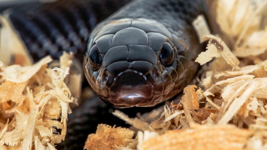Если укуса змеи во сне удалось избежать, наяву произойдет примирение врагов.