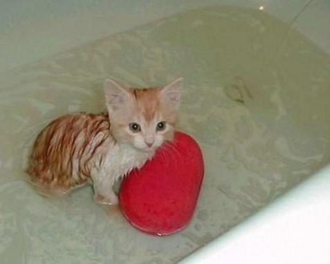 Чтобы успокоить котенка во время купания, с ним нужно разговаривать. поможет и любимая игрушка питомца.