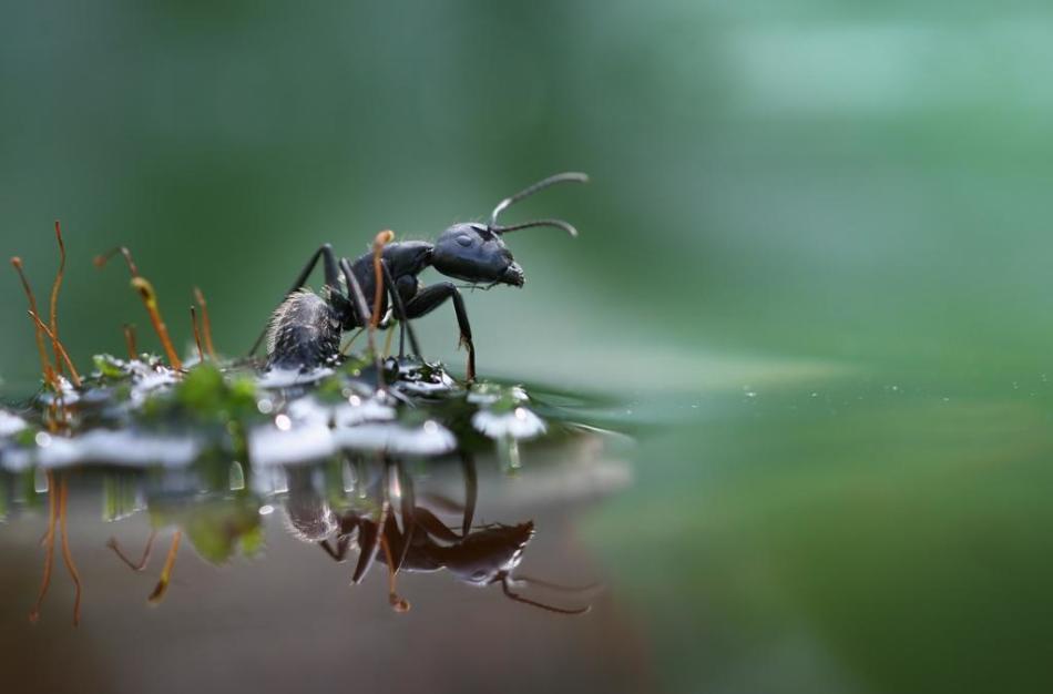 Как избавиться от муравьев домашними методами?