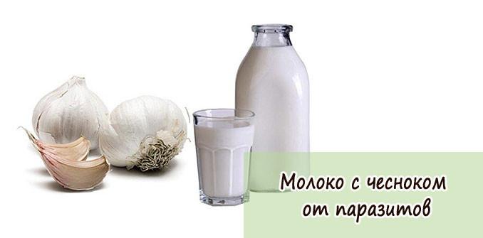 Настойка из молока и чеснока от глистов