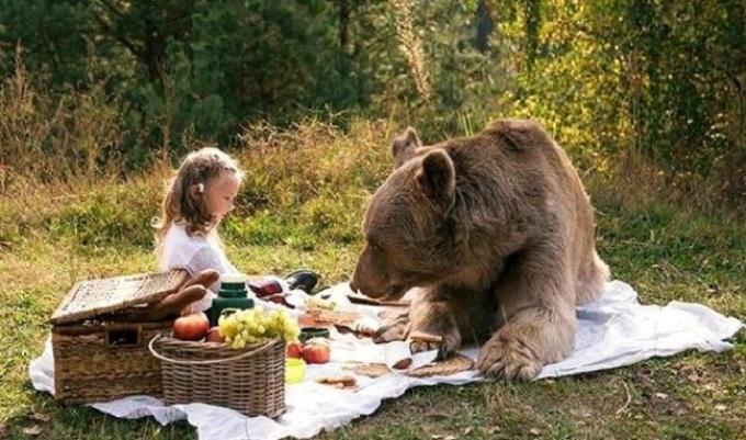 Кормить во сне медведя — хороший знак