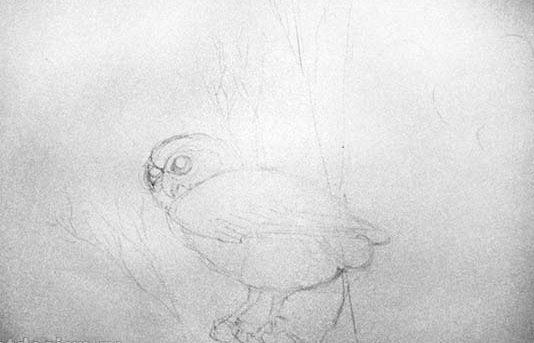 f2da6bbb97dfc1c9954087d8c9934a7c Как рисовать сову карандашом поэтапно для начинающих и детей? Как рисовать по клеточкам сову, красками?