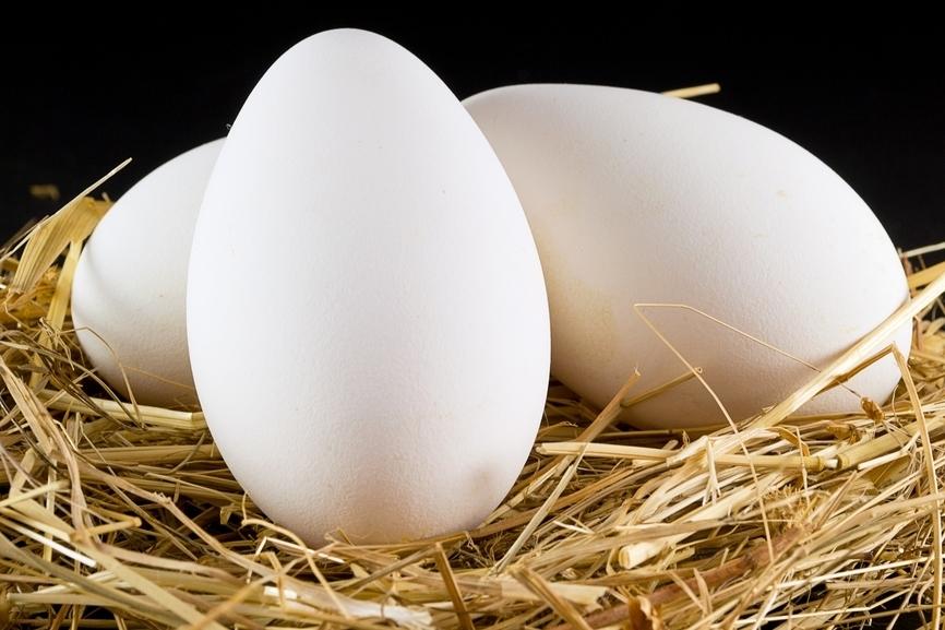 Сколько варить гусиные яйца?