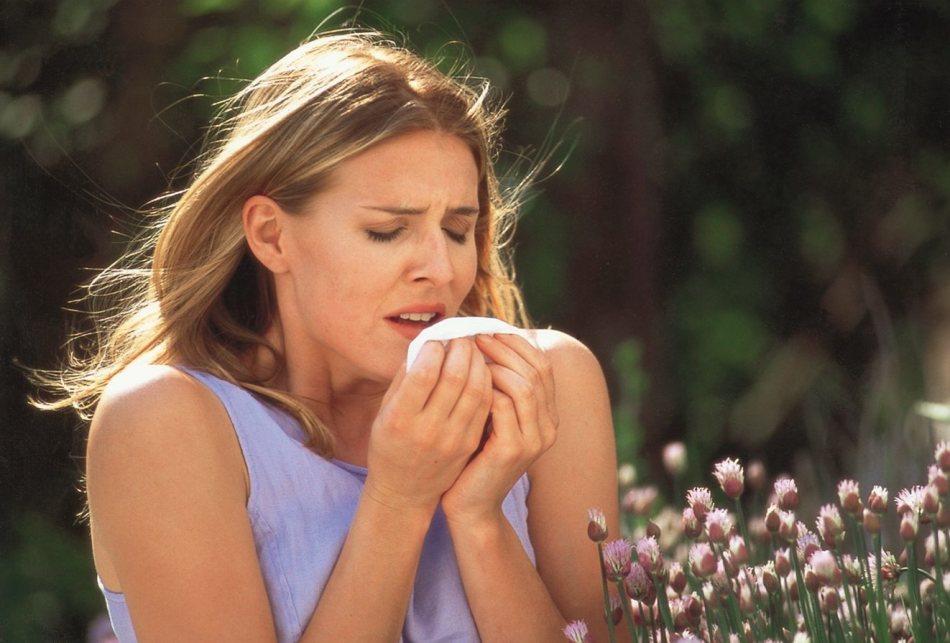 Пчелиная обножа - средство борьбы с поллинозом.