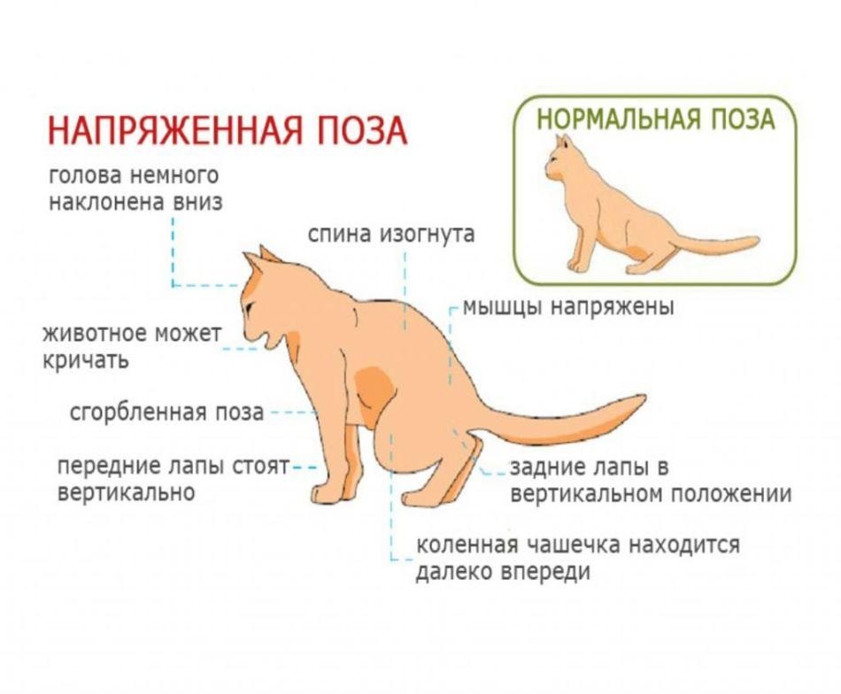 Диета при цистите кошкам
